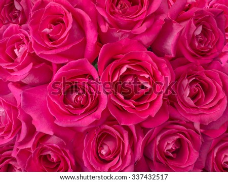 Bright red roses stock photo 37913272 shutterstock - Deep pink wallpaper ...