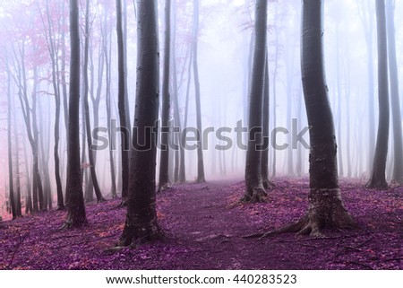 Romantic foggy forest