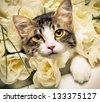 romantic kitten - stock photo