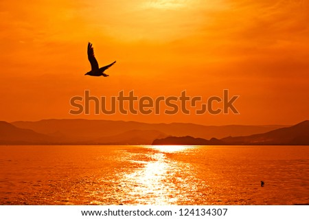 Romantic view of the sunset on sea with seagull