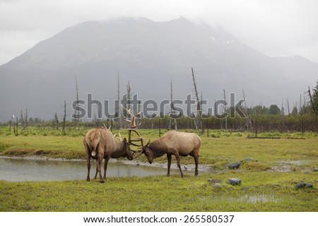 Roosevelt Elks fight, Alaska