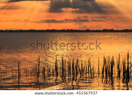 Root of tree on the lake with sunset background