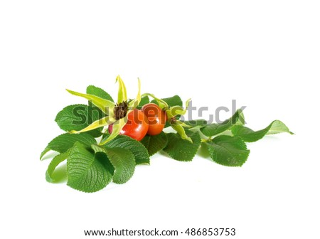 Rose hips isolated on white background