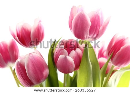 Rose Tulips Bunch