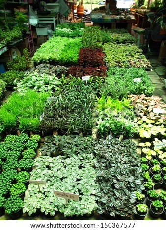 rows of pots with tiny little small plants in botany shop botanical market Thailand