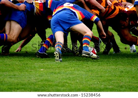 Rugby Scrum.  Two opposing rugby teams pack down a scrum as the ball is put in.
