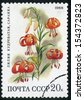 RUSSIA  - circa 1988: stamp printed by Russia, shows flower, lily, Lilium martagon circa 1988 - stock photo