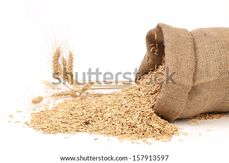 Sack with grains and ear of wheat. Isolated on a white background.