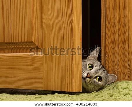 Sad cat looking to the right between doors sad grey cat green eyes cat & Curious Cat Looking Between Door Funny Stock Photo 393607240 ... Pezcame.Com