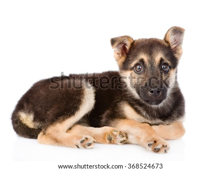 sad mixed breed puppy dog looking at camera. isolated on white background