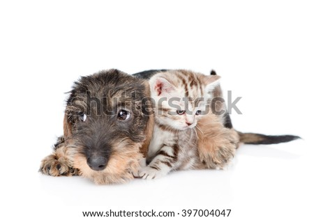Sad puppy hugging tiny kitten. isolated on white background