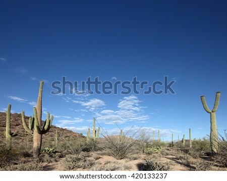 Saguaro National Park near Tucson, AZ