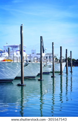 Sailing boats lined up at Westhaven marina, Auckland, in the morning. Selective focus
