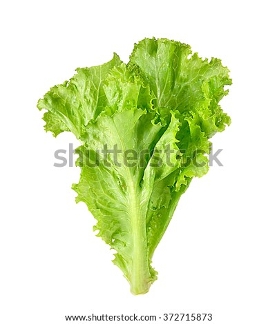 salad leaves isolated on white background