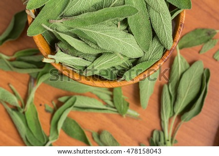Salvia. Common Garden sage over a wooden table