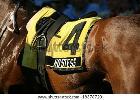SARATOGA SPRINGS - September 1: Closeup of  Saddle Cloth on Hostess in the Winners Circle after the Grade III Glens Falls Stakes on September 1, 2008 in Saratoga Springs, NY