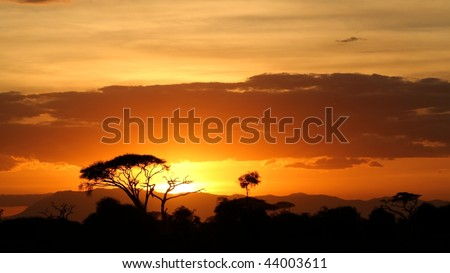 Savanna landscape at sunset