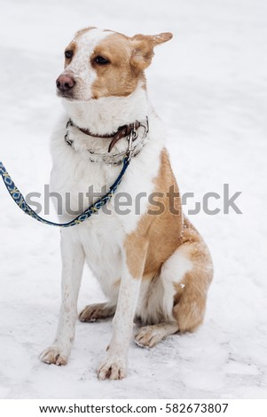 Scared beige dog sitting snowy cold stock photo 582650419 shutterstock - Dogs for small spaces concept ...