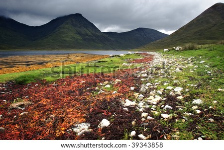 Scenery of colorful sea weed on shore at lake with some sheep and mountain chain on Isle of Skye, Scotland