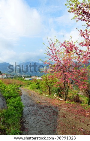 Scenic mountains and blooming sakura flowers in Taiwan during spring
