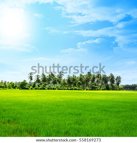 scenic rice fields and palm trees in the distance