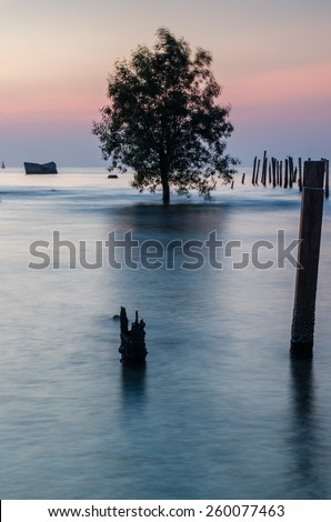 Scenic Sea Sunset Background with Silhouette tree