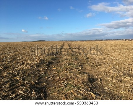 scenic view of corn field in the winter