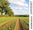 Scenic View of Crops Growing on Farmland in Rural England - stock photo
