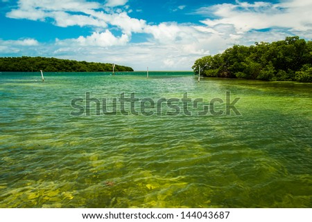 Scenic view of the Florida Keys with mangroves along the coastline.