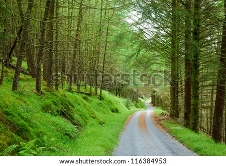 Scenic winding road through green forest in Scotland