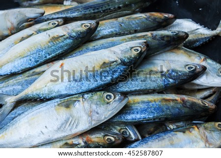Sea fish mackerel pile in tank in market , sea mackerel mound, heap of sea mackerel in container.