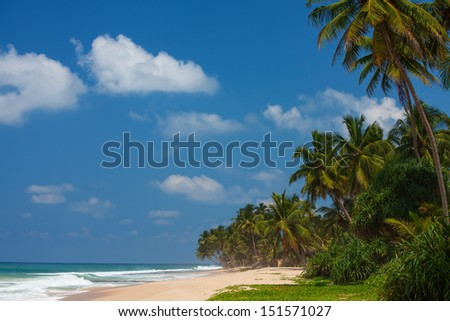 Sea landscape with palm trees