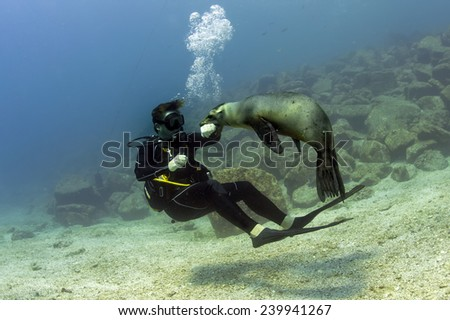 Sea lion seal while biting a diver underwater