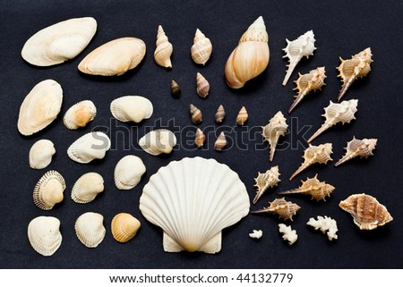 sea shell collection on dark background