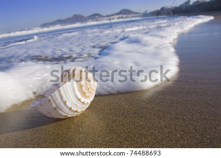Sea shell in the surf zone on Las Canteras beach on Gran Canaria.