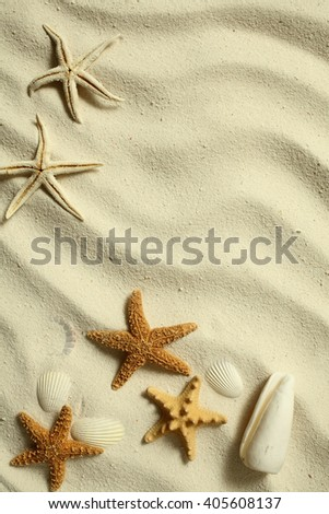 Sea shells and sea stars arrangement on  white sand background
