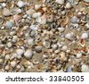 sea shells on sand seamless background - stock photo