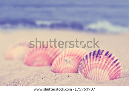 sea shells on the sandy beach and blue sea background
