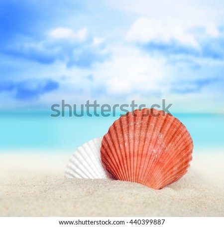 Sea Shells On Summer Beach Two Stock Photo 440399872 Shutterstock