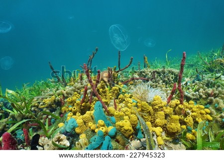 Seabed with colorful sea creatures and jellyfish in background, Caribbean sea