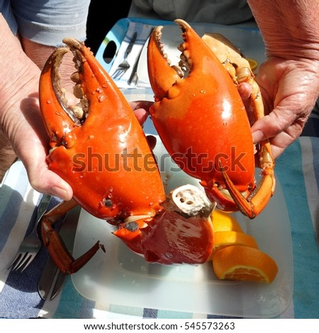 Seafood lunch, Large cooked Mud Crab Nippers. Queensland, Australia.