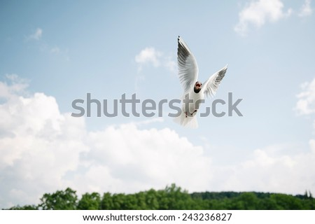 Pigeon Religion - Warm Insides