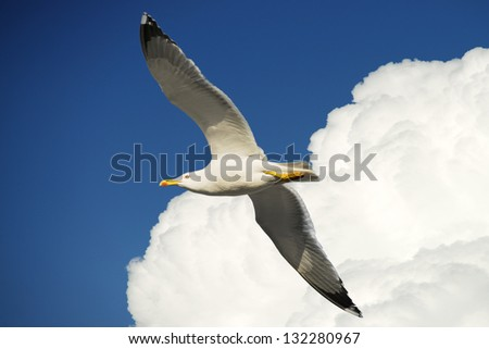 Seagull fly very high