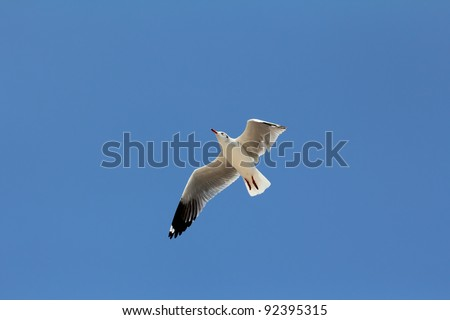 Seagull flying and look for food on blue sky over the coast of bangpoo thailand