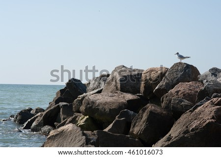 seagull on the rocks