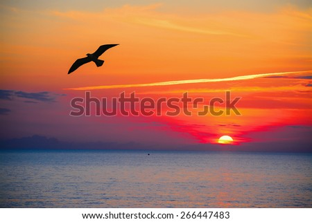 seagull silhouette in an orange sky at sunset