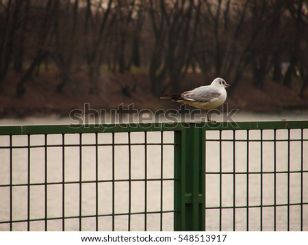 Seagull standing on a green metal fence on the lake or river bank with out of focus water and trees in background