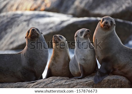 Seals on rocks with sunset