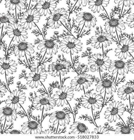 Seamless background from hand drawn chamomile, flower pattern