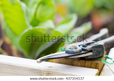 Secateurs lying in a garden or allotment